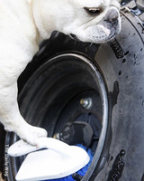 pets_best_wag_carwash1.jpg