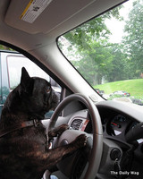 pets_best_wag_driving1.jpg