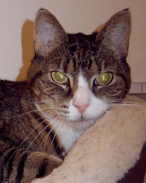r_pets_bestys_cat_cleo.jpg