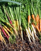 vegetable-harvest-0815.jpg