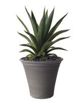 agave-plant-012-d112053.jpg