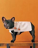 dog-clothes-mmpa102354d.jpg