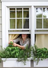 window-herb-garden-1016.jpg (skyword:349126)