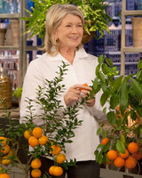 5075_011310_citrusplants.jpg