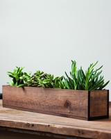 giselle-succulent-trough.jpg