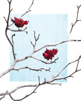 mld104165_1208_cardinals.jpg