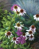 ogden-garden-281-d111601.jpg