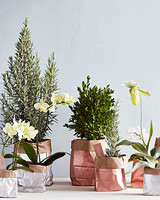 plant gift bag