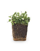alpine-geranium-mld108562.jpg