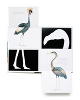 chronicle-books-bird-book.jpg
