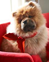 ed105767msl_1210_dogs_083.jpg