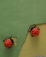 kids_spring06_egg_ladybug.jpg