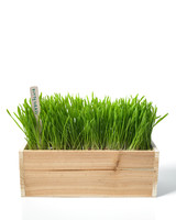 ld105281_0110_kitty_grass_hd.jpg