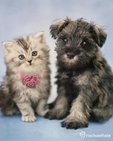 pets_2064_chanel_and_coco.jpg