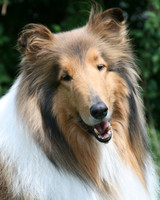 r_pets_laddie_lisas_dog_2.jpg