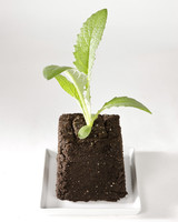 4108_030309_soilblock_prev.jpg