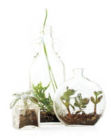 bottle-terrarium-mld108490.jpg