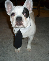 pets_frenchies_ori00080173.jpg