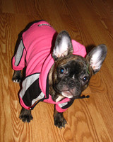 pets_frenchies_ori00080794.jpg