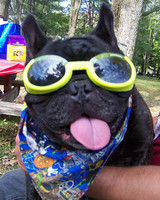 pets_frenchies_ori00086633.jpg