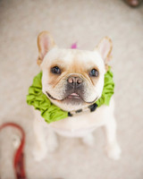 pets_frenchies_ori00089921.jpg