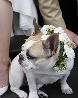 pets_frenchies_ori00092991.jpg