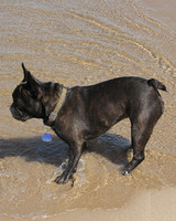 pets_frenchies_ori00096761.jpg