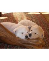 pets_lazy_0909_ori00099105.jpg