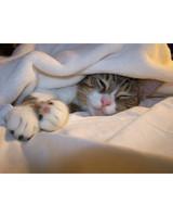 pets_lazy_0909_ori00099380.jpg