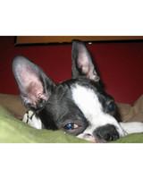 pets_lazy_0909_ori00099491.jpg
