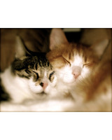pets_lazy_0909_ori00100027.jpg