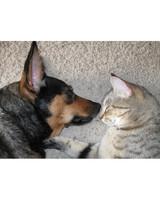 pets_lazy_0909_ori00100237.jpg