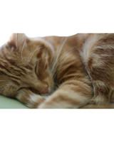 pets_lazy_0909_ori00100787.jpg