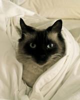 pets_lazy_0909_ori00100825.jpg