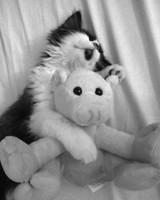 pets_lazy_0909_ori00100877.jpg