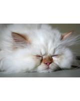 pets_lazy_0909_ori00100947.jpg