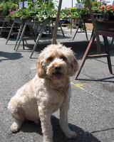 r_pets_buddy_in_the_market.jpg