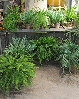 6111_030111_fern_collection.jpg