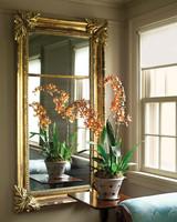 mld104947_sept2009_orchid2b.jpg