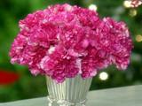 msshow_6067_carnations_prev.jpg