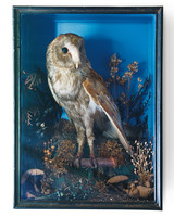 owl-taxidermy-1011mld106418.jpg