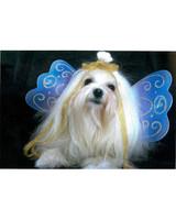 pets_photo_5601435_11947775.jpg
