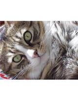 ugc-adoptable-0811-11008671.jpg