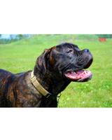 ugc-adoptable-0811-11944375.jpg
