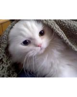 ugc-adoptable-0811-12010513.jpg