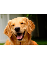 ugc-adoptable-0811-13226210.jpg