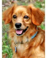 ugc-adoptable-0811-26054964.jpg