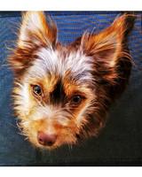 ugc-adoptable-0811-26060805.jpg