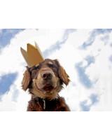 ugc-adoptable-0811-29627182.jpg