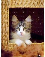 ugc-adoptable-0811-33310211.jpg